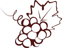 Grapes. Sketch of a grapes bunch stock illustration