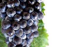Free Grapes Royalty Free Stock Photos - 15032898