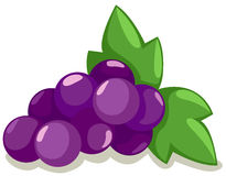Grapes. Illustration of isolated purple grapes with leaves on white vector illustration