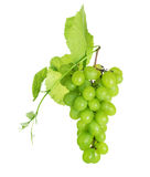 Grapes. Beautiful Grapes Cluster isolated on a white background Royalty Free Stock Photography