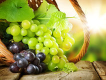 Free Grapes Royalty Free Stock Photography - 15790997