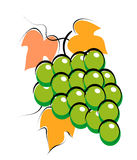 Grapes. Illustration of grapes on white background Royalty Free Stock Photos