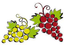 Grapes,. Red and green grapes with vine leaves stock illustration