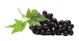 Grapes. Black grapes and leaf isolated on white background Stock Photography