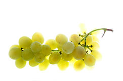 Grapes. Low Carb Diet fresh grapes Stock Images