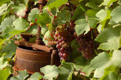 Grapes. Beside a rusty wine press Stock Image