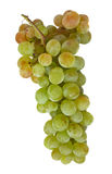Grapes 2. Isolated grapes on white background - with clipping path Royalty Free Stock Photos