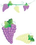 Grapes. A vector illustration of grapes Royalty Free Stock Photo