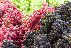 Grapes. A group of grapes, black, red and green Royalty Free Stock Images