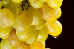 Grapes. Isolated on black background Stock Image