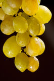 Grapes. Isolated on black background Stock Photos