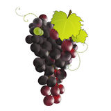 Grapes. Fruits/Bunch of black grapes Royalty Free Stock Images