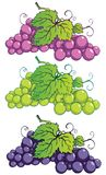 Grapes. Bunch of grapes with leaves Royalty Free Stock Photos