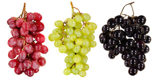 Grapes Stock Images