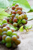 Grapes. Bunch of grapes on wooden table Stock Photos