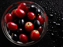 Grapes. On a black  background Stock Photos