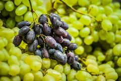 Grapes. Green and red grapes at the market Royalty Free Stock Photo