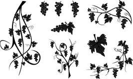 Free Grapes Royalty Free Stock Photos - 30322578