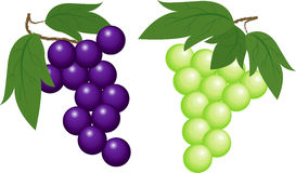Grapes. The grape and muscat isolated Royalty Free Stock Images