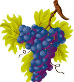 Grapes stock illustration