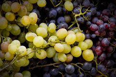 Free Grapes Stock Images - 3415884