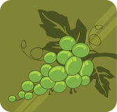 Grapes. Illustration of  bundle of grapes with two leaves and tendrils Stock Image
