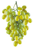 Grapes. Grapevine Royalty Free Stock Photography
