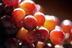 Free Grapes Stock Photos - 4322163