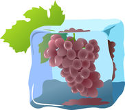 Grapes. Fresh grapes frozen in ice, illustrations vector stock illustration