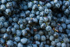 Grapes. Bunch of grapes of different colors Royalty Free Stock Photos