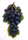 Grapes. Purple grapes on white background Stock Photo