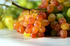 Grapes. Armenian mixed Grapes on white royalty free stock image