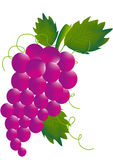 Grapes. Bunch of red grapes stock illustration