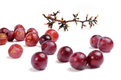 Grapes. Finished grape pod and some grapes out of bunch royalty free stock photography