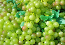 Grapes. Background stock photos