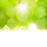 Grapes against the sun Stock Photo