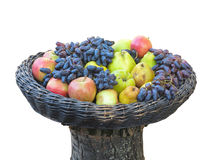 Grapes, apples, pears, quince in basket on tree trunk isolated Royalty Free Stock Images