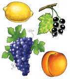 grapes apricot lemon black currant wine vine Stock Photo