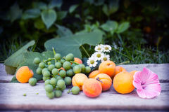Grapes, apricots, daisys and mallow on wooden table. And green leaves background Stock Image