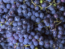 Grapes as background Royalty Free Stock Images
