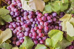Grapes as very nice fruit background Royalty Free Stock Photos
