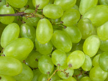 Grapes background Royalty Free Stock Photo