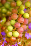 Grapes background Royalty Free Stock Images