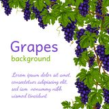 Grapes background wallpaper Royalty Free Stock Photos
