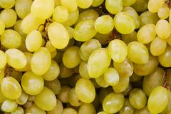 Grapes background Stock Photography
