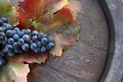 Grapes on barrel Stock Photos