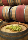 Grapes on the barrel Stock Image