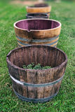 Grapes in the barrel. Stock Image