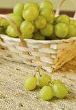 Grapes in a basket Royalty Free Stock Photography