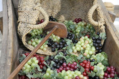 Grapes and basket Royalty Free Stock Photography